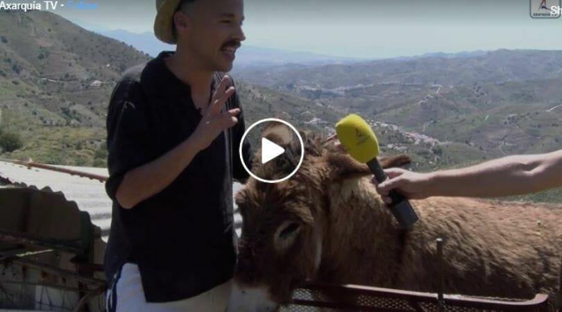 man reuniting with donkey