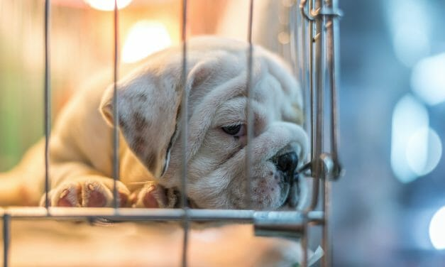 USDA Gets Stricter on Puppy Mills, But It Isn't Enough