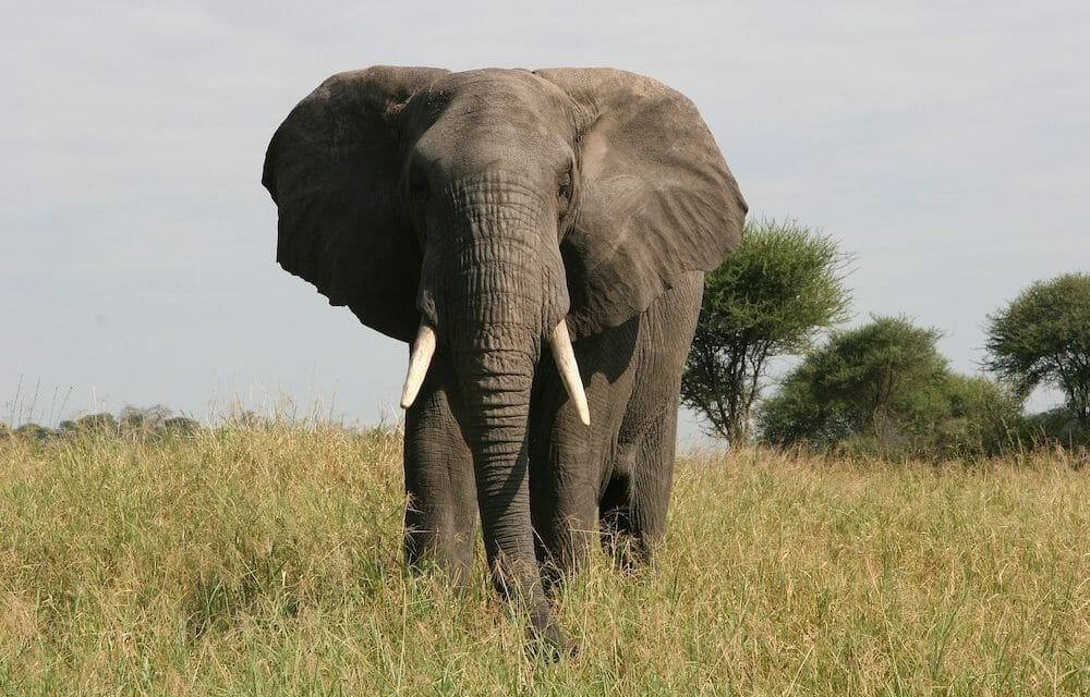 Washington DC Has Officially Banned the Sale of Ivory and Rhino Horns