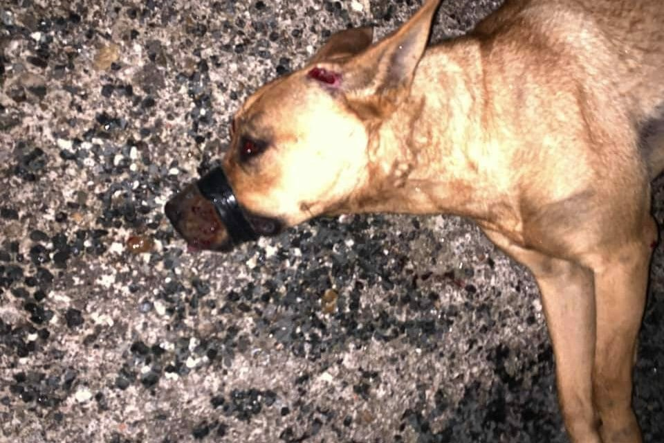 SIGN: Justice for Dog with Snout Taped Shut, Left On Roadside to Die