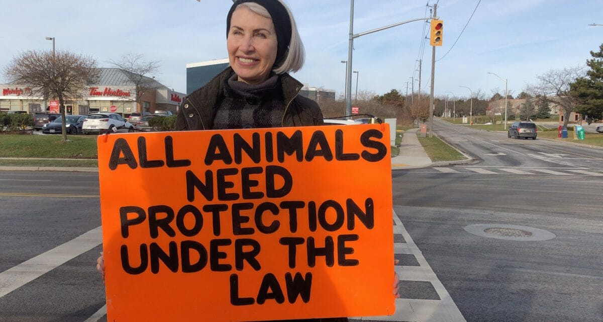 Animal Activist Killed By Pig Transport Truck At Peaceful Slaughterhouse Protest
