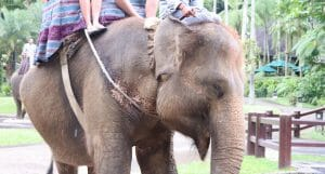UPDATE: UK Moving To Ban Travel Advertisements That Promote Elephant Torture