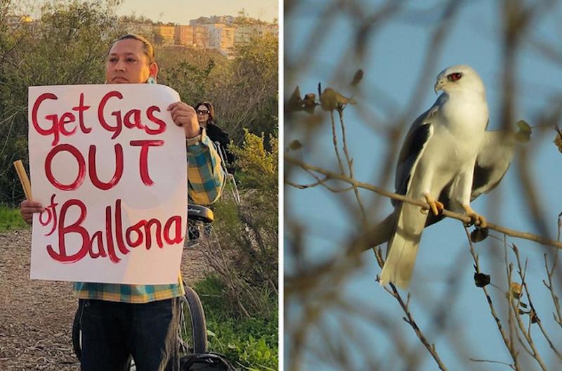 Activists Fight Back Against Plans to Bulldoze the Last Coastal Wetlands in LA