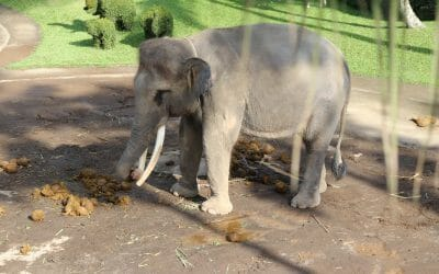 SIGN: Stop Abusing Elephants for Tourist Dollars at Mason Elephant Park