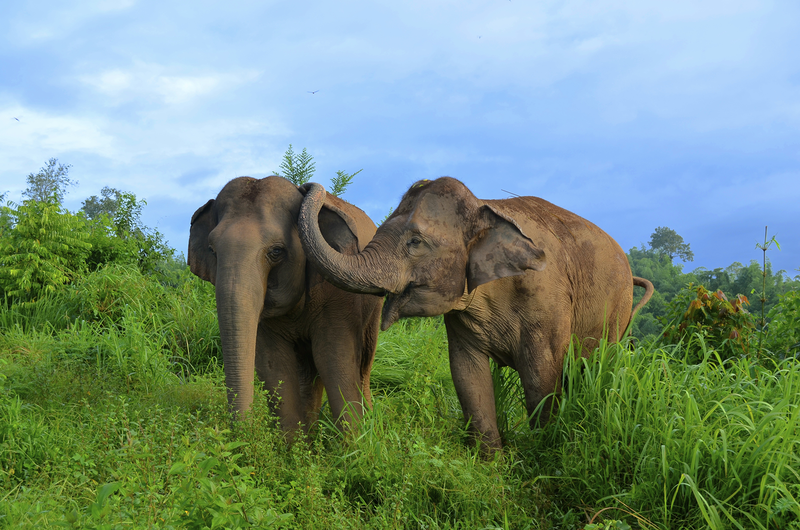 Indian Man Shows Elephants Kindness by Donating Over 6 Acres of Land