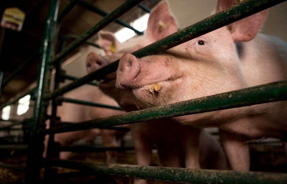 Judge Strikes Down Ag-Gag Law for Violating First Amendment Rights