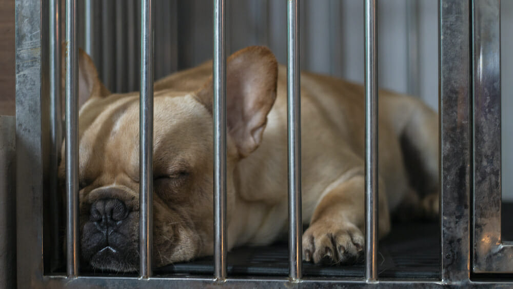 SIGN: Justice for 38 Frenchies Who Suffocated to Death on 10-Hour Flight