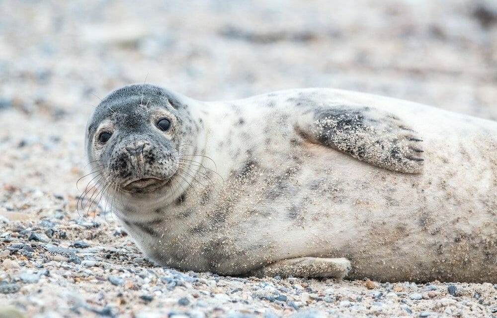 Scottish Salmon Farmers Are Now Banned from Shooting 'Pesky' Seals
