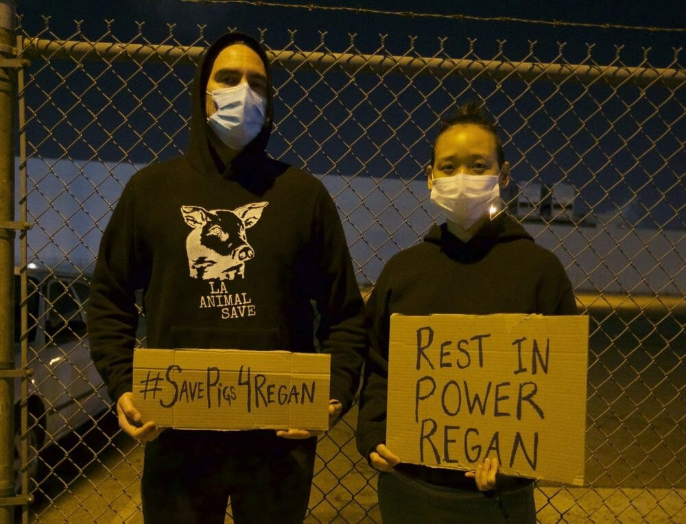 Joaquin Phoenix animal rights activist