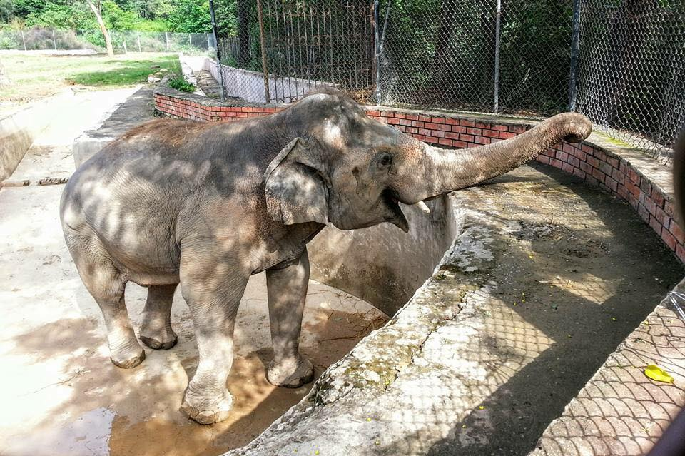 Pakistan's Loneliest Elephant Is About to Be Free for the First Time Since 1985