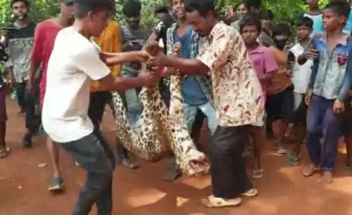 SIGN: Justice for Leopard Beaten to Death and Paraded Around Village