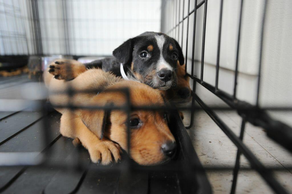 sad puppies in cage