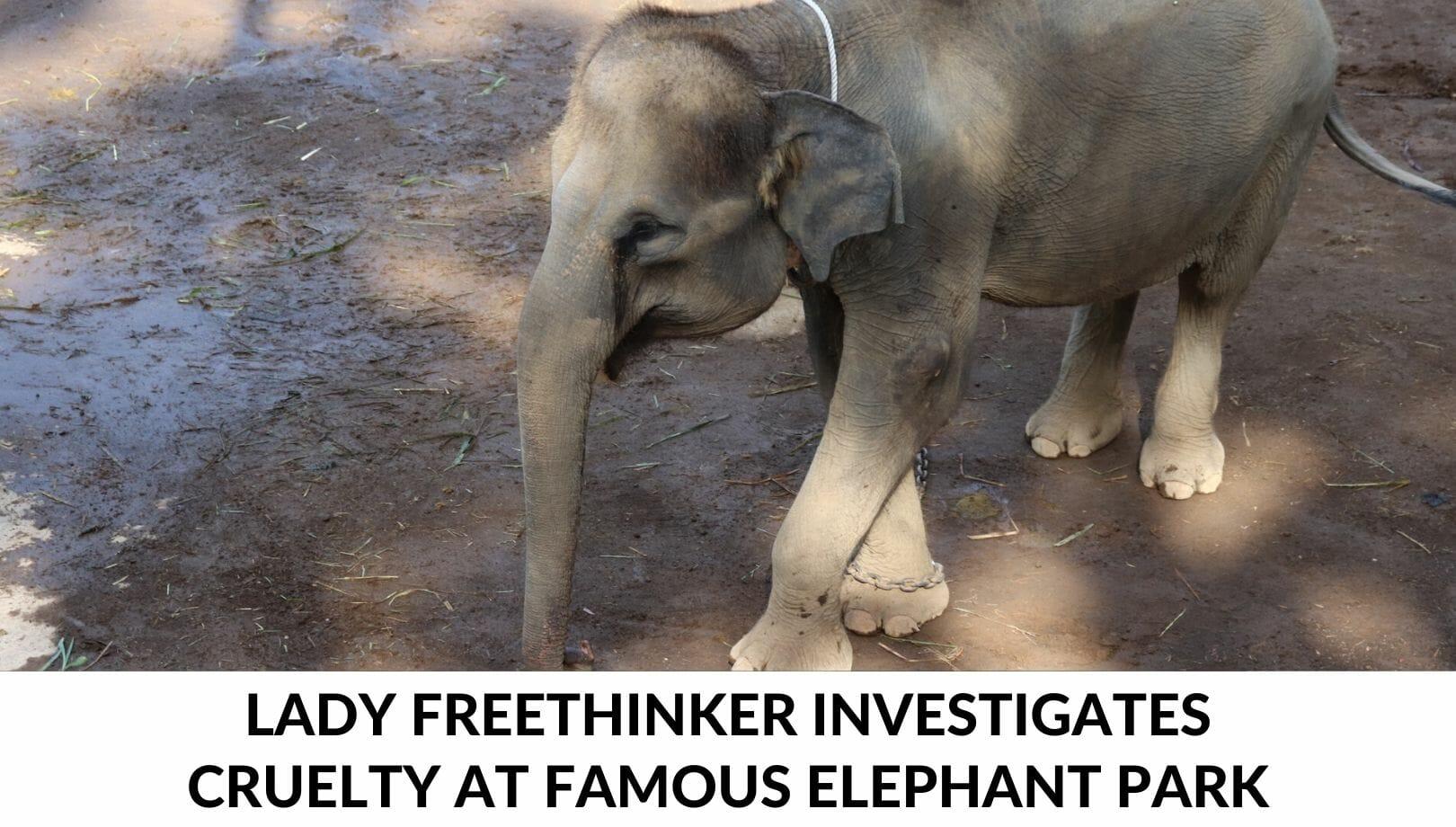elephant cruelty