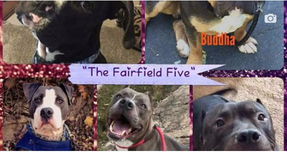 New Park Bench Makes Sure No One Forgets 'Fairfield 5' Dogs Cruelly Starved to Death