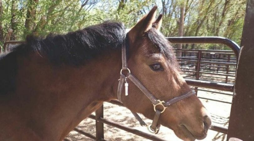 SIGN: Justice for Rocky, Pony Stabbed and Butchered in His Stall
