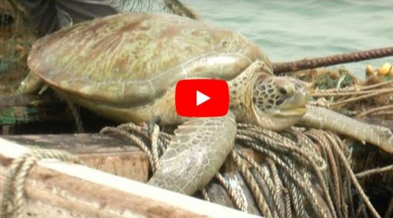 sea turtle on boat