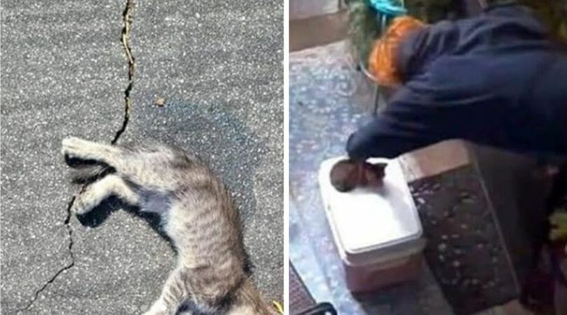 SIGN: Justice for Kitten Brutally Drenched in Bug Spray