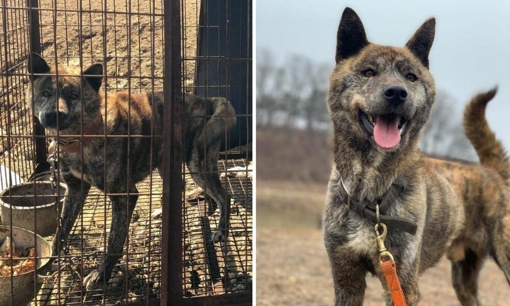Marble the Dog Meat Trade Survivor Is Training to Become A Hero