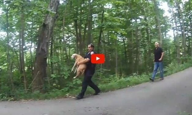 VIDEO: Heroic Officer Runs Into Burning Building to Save Two Dogs