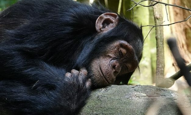 SIGN: Stop Disastrous Plan to Chainsaw Chimps' Homes