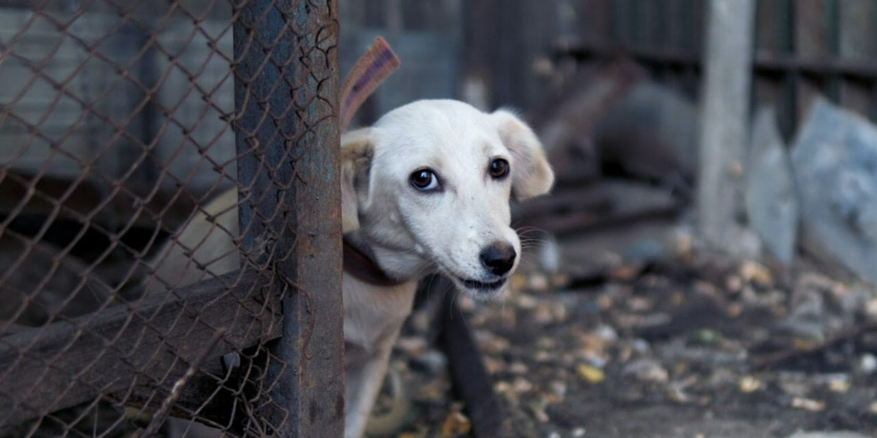 UPDATE: Chicago Anti-Puppy Mill Amendment Approved by Committee, Final Vote Coming Soon