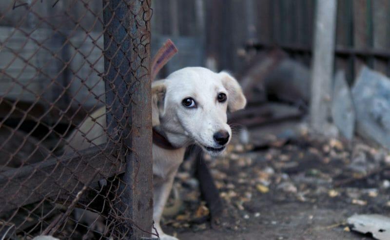sad dog outdoors