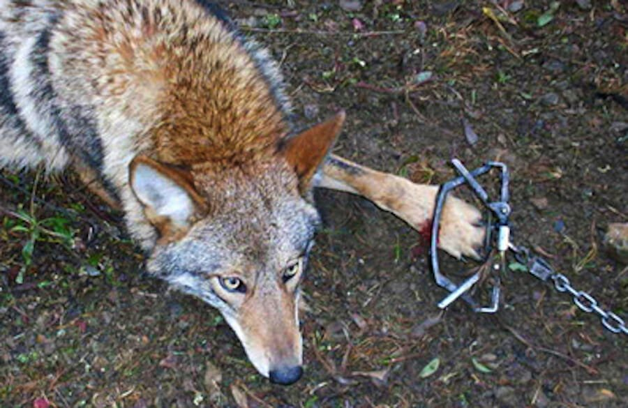 SIGN: End Barbaric Fur Trapping In The US