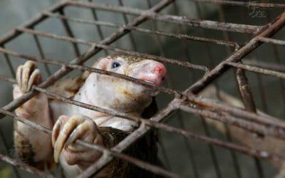 UPDATE: Vietnam Bans Wild Animal Imports, Cracks Down on Wildlife Markets