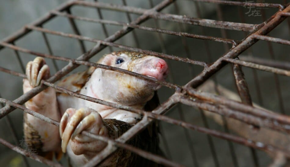 UPDATE: Vietnam Bans Wild Animal Imports, Cracks Down on Wildlife Markets