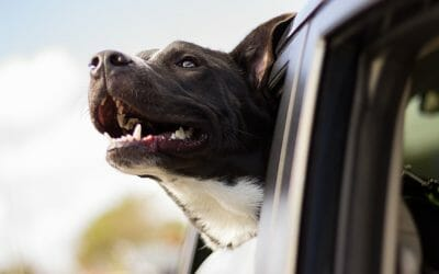 PETITION UPDATE: Iowa Passes Stronger Animal Cruelty Laws