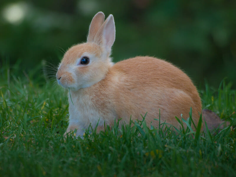 Colombia to Become the First South American Country to Ban Animal Cosmetics Testing