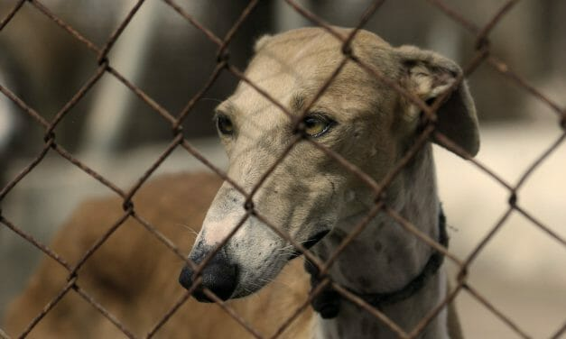 SIGN: End the Cruel Greyhound Racing Industry in the US