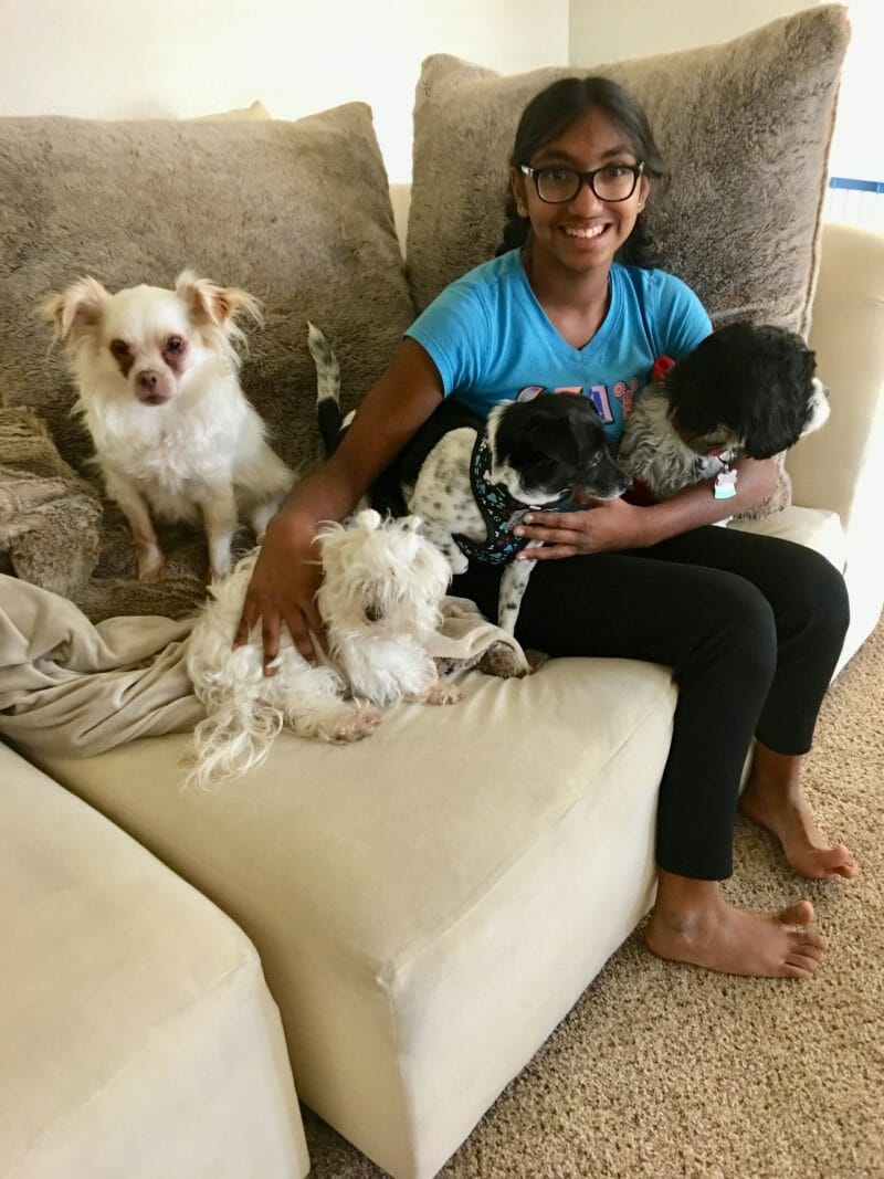pet sitting happy dogs