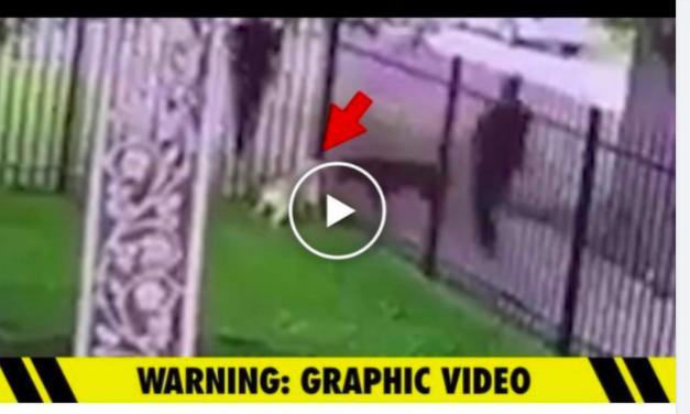 SIGN: Justice for Dog Shot and Killed in His Own Yard by Police