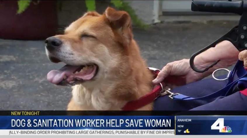 dog saves woman