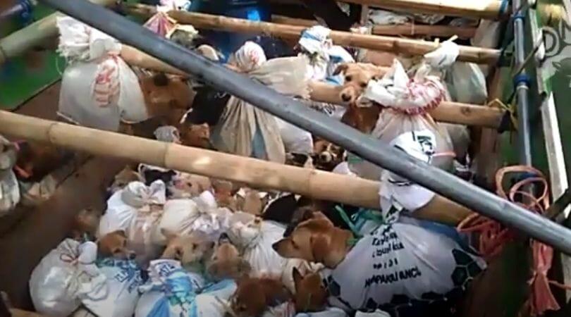 Indonesia's Hazardous Dog Meat Trade Goes On Despite COVID Pandemic