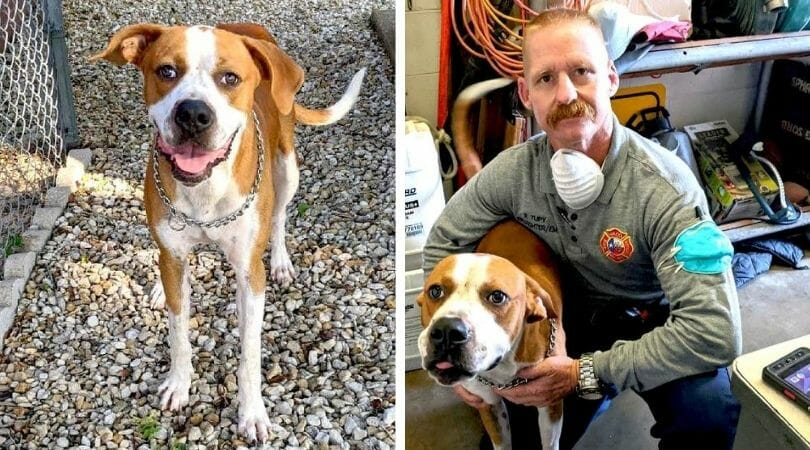 Local Firefighter Cant Help but Adopt This Sweet Abandoned Dog