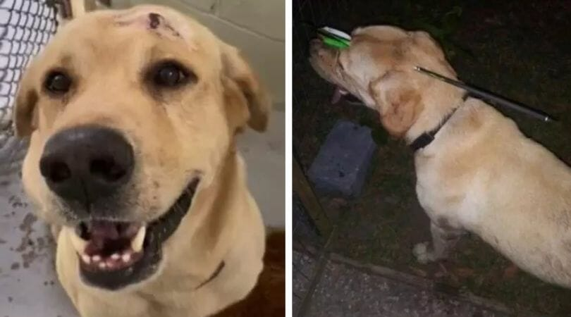 SIGN: Justice for Labrador Shot Through the Head with Crossbow