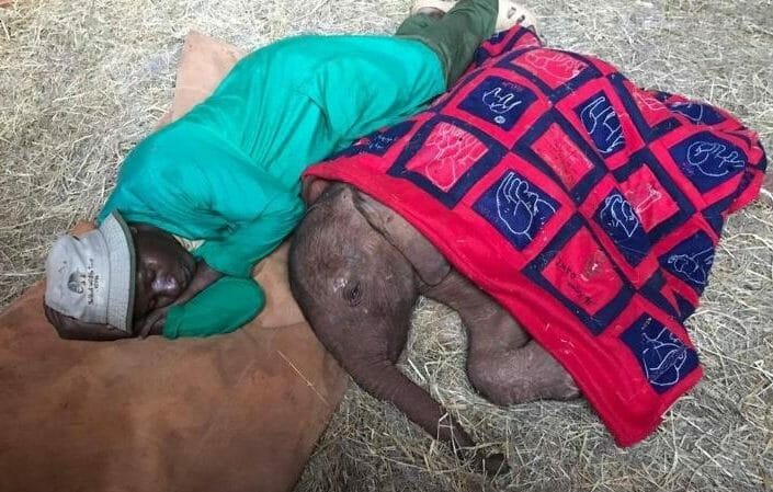 Caretaker Snuggles Up With Orphaned Baby Elephant to Keep Her from Missing Her Mom