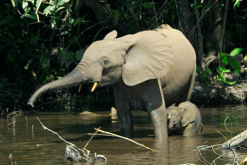 Poacher Who Killed 500 Elephants Gets 30 Years in Prison