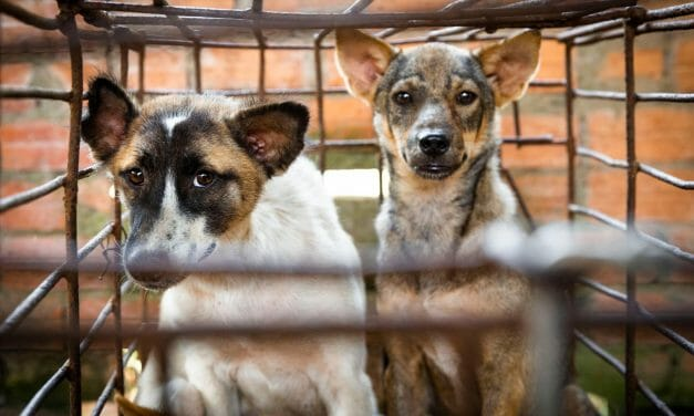 Dog Meat Butcher Shuts Down Slaughterhouse and Opens Convenience Store