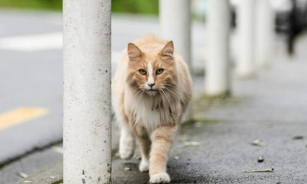 Mittens the Cat Is in the Running for New Zealander of the Year