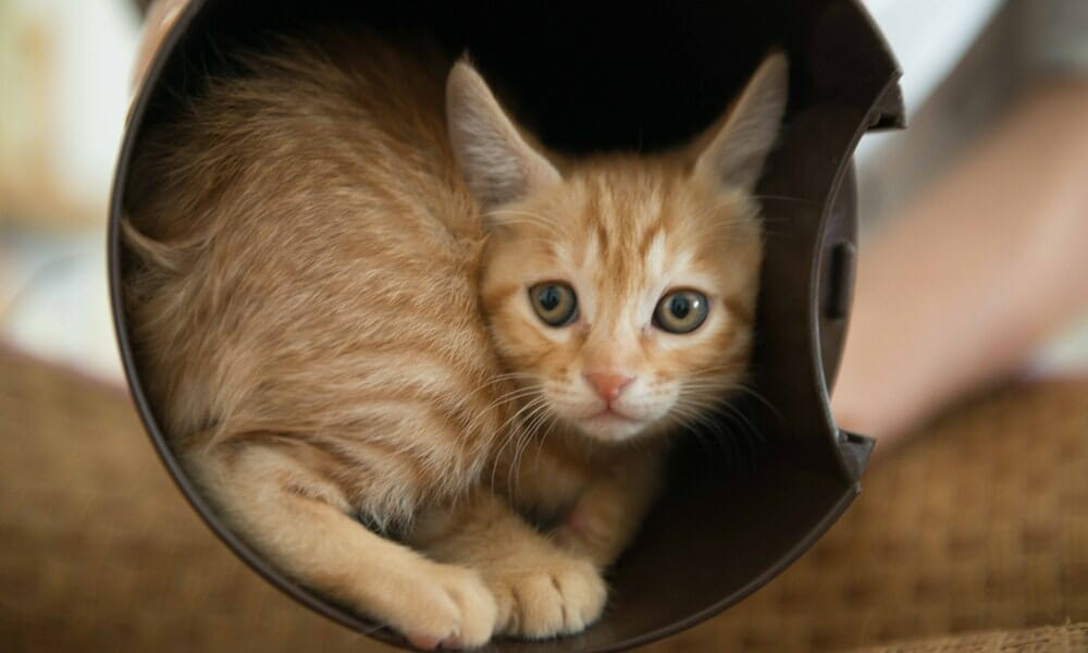 Animal Cruelty Cases Paint A Dire Warning: Don't Give Animals Away on Craigslist