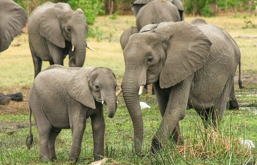 An 'Elephant Baby Boom' Is Underway at Kenyan National Park