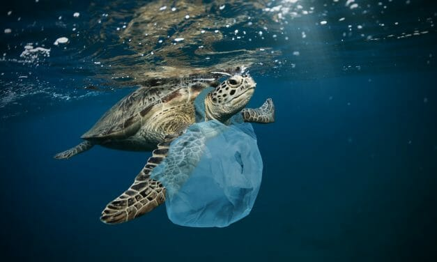 SIGN: Save Sea Turtles from Choking to Death on Single-Use Plastics