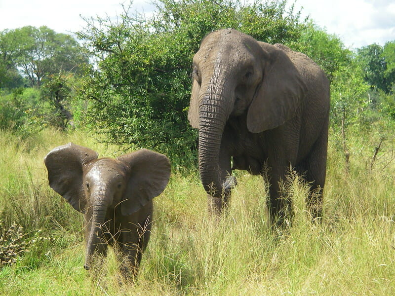 Elephants Could Become Much Safer with New Artificial Intelligence Tracking