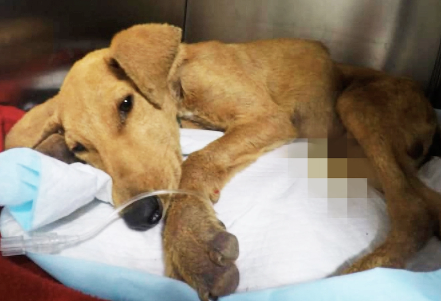 SIGN: Justice for Puppy Sexually Assaulted to Death in Chile
