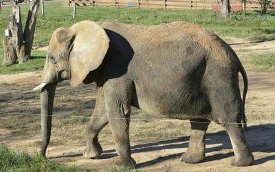 SIGN: Save Asha the Lonely Elephant from Miserable Captivity