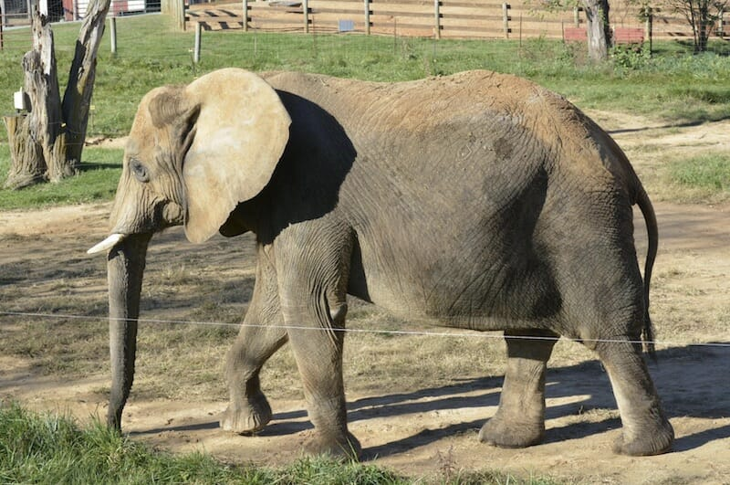 SIGN: Save Asha the Lonely Elephant from Miserable Captivity