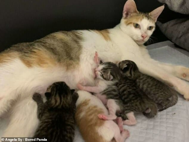 Office Workers Bring In Stray Cat Days Before She Gives Birth to 8 Kittens